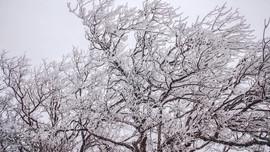 Dự báo thời tiết ngày 10/1: Đón không khí lạnh tăng cường, Hà Nội rét hại