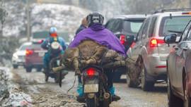 Hàng trăm vật nuôi chết do giá rét ở miền núi phía Bắc