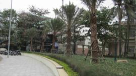 Bình Định: Người dân mong muốn xóa bỏ công viên vòng xuyến Mũi Tấn
