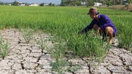 ĐBSCL chủ động ứng phó hạn mặn gay gắt trong mùa khô 2020 – 2021: Tái diễn khốc liệt