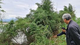 """Sông Trà Khúc sạt lở nguy hiểm, đất đai bị """"nuốt"""" hàng trăm mét"""