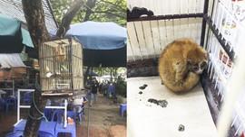 Hơn 1.100 cá thể động vật hoang dã được giải cứu và tịch thu