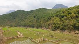 Thanh Hóa: Kế hoạch trồng cây, trồng rừng năm 2021