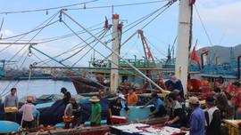 """Chuyến biển cuối năm đầy vị """"ngọt"""" của ngư dân miền Trung"""