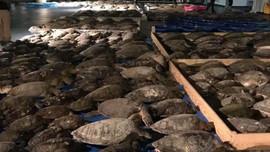 Mỹ giải cứu hơn 4.000 con rùa biển trong thời tiết giá lạnh