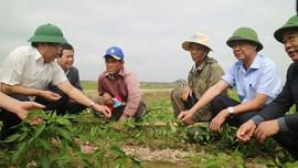 Quảng Trị: Đảm bảo hiệu quả sản xuất lúa vụ Đông Xuân 2020 - 2021
