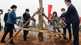 Bắc Ninh: Trồng mới gần 20.000 cây xanh các loại