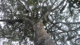 Giữ rừng... vì mục tiêu kép ở Điện Biên
