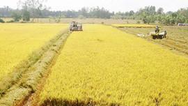Hà Nam: Bổ sung, điều chỉnh danh mục các dự án thu hồi đất, dự án chuyển mục đích sử dụng đất dưới 10 ha đất trồng lúa