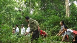 Nghệ An: Tiếp tục hỗ trợ gạo cho hộ nghèo trồng, chăm sóc, bảo vệ rừng
