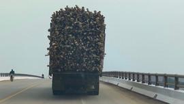 Chủ tịch tỉnh Thanh Hóa yêu cầu không để tái diễn tình trạng xe quá khổ, quá tải