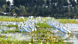 Sẽ thành lập Mạng lưới các khu Ramsar Việt Nam