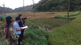 Mai Sơn (Sơn La): Tăng cường công tác quản lý đất đai