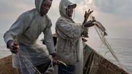 Một phần ba các loài cá đang đối mặt với nguy cơ tuyệt chủng