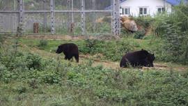 Để những cá thể gấu được về với tự nhiên