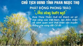 Thừa Thiên Huế phát động phong trào trồng mai vàng trước ngõ mỗi cơ quan, nhà dân