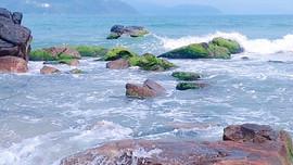 Đẹp ngỡ ngàng mùa rêu xanh mướt tại rạn Nam Ô (Đà Nẵng)