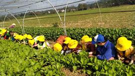 """Những vườn rau """"du lịch"""" ở Đà Nẵng"""
