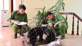 Lai Châu: Tuyên phạt đối tượng buôn bán gấu ngựa 3 năm tù giam