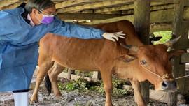 Thanh Hóa: Kiên quyết đóng cửa, xóa bỏ cơ sở thu gom, giết mổ gia súc, gia cầm trái phép, không đảm bảo vệ sinh môi trường