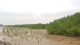 Thanh Hóa: Phê duyệt Dự án hiện đại hóa Lâm nghiệp và Tăng cường chống chịu vùng ven biển