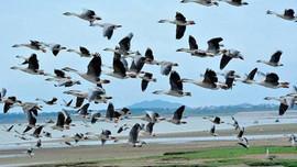 Đóng góp ý kiến bảo tồn các loài chim hoang dã, di cư