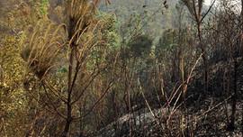 Sơn La: Liên tiếp xảy ra 2 vụ cháy rừng tại Thuận Châu