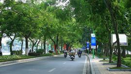 Cây xanh cho đô thị