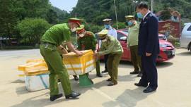 Vân Hồ (Sơn La): Tiêu hủy 445 kg nội tạng trâu bò không rõ nguồn gốc