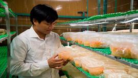 Thanh Hóa: Mô hình nuôi cấy đông trùng hạ thảo trong môi trường nhân tạo