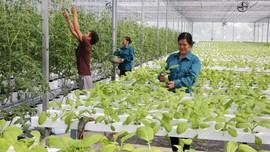Nông nghiệp vượt khó thời dịch bệnh