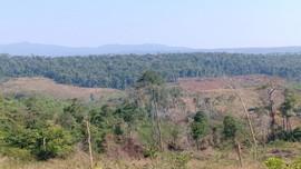 Đắk Nông: Đẩy mạnh công tác quản lý, bảo vệ rừng tự nhiên