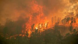 Cháy rừng lớn hoành hành nước Mỹ, 200 ngôi nhà phải sơ tán