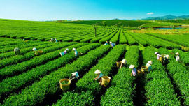 Đất có nguồn gốc từ nông, lâm trường quốc doanh: Cần xác định thực địa, hồ sơ địa chính để quản lý
