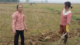 Huyện Điện Biên: Dồn điền đổi thửa – giải pháp nâng cao năng suất cây trồng