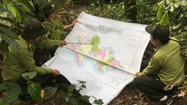 Phù Yên nâng cao hiệu quả quản lý, bảo vệ rừng