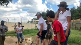 Nam Phi sẽ hạn chế nuôi nhốt sư tử