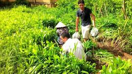 Điện Biên: Đảm bảo cung ứng giống cho mùa trồng rừng