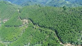 Hiệu quả từ thực hiện chương trình mục tiêu phát triển lâm nghiệp ở Lạng Sơn