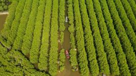 Quảng Ngãi: Kiên quyết xử lý 7 hộ dân đào ao lấn chiếm rừng phòng hộ Bàu Cá Cái
