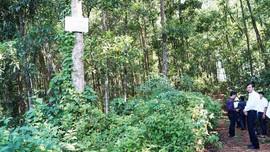 Quảng Ngãi: Ngăn chặn tình trạng xâm hại đất rừng