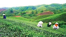Bàn giao đất nông, lâm trường cho địa phương: Sẽ có hướng tháo gỡ