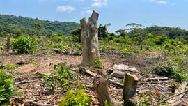 Quảng Bình: Rừng phòng hộ đầu nguồn hồ Rào Đá bị chặt phá