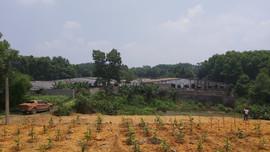 Thái Nguyên: Hàng nghìn m2 đất nông nghiệp không thể canh tác vì trang trại nuôi lợn xả thải