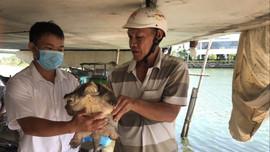 Phát hiện rùa cá sấu tại đầm Thị Nại – thành phố Quy Nhơn
