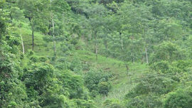 Kiên quyết xử lý tổ chức, cá nhân để mất rừng