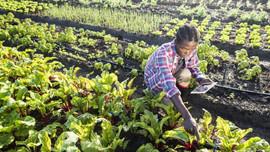 Hàng loạt dự án nông nghiệp thích ứng biến đổi khí hậu được phê duyệt