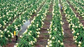 ĐBSCL: Phát triển nông nghiệp bền vững thích ứng với biến đổi khí hậu