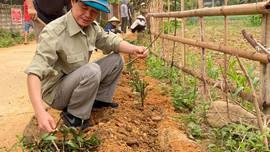 Hiệu quả Ngày về cơ sở giúp người dân thực hiện tiêu chí môi trường ở Phù Yên