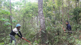 Tủa Chùa - Điện Biên: Phát huy hiệu quả chính sách chi trả dịch vụ môi trường rừng